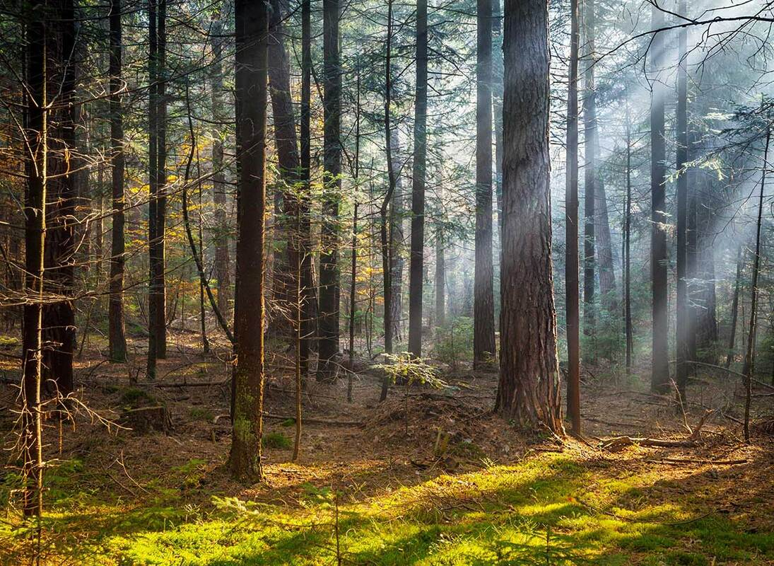 Morning Light Coming Through Forest